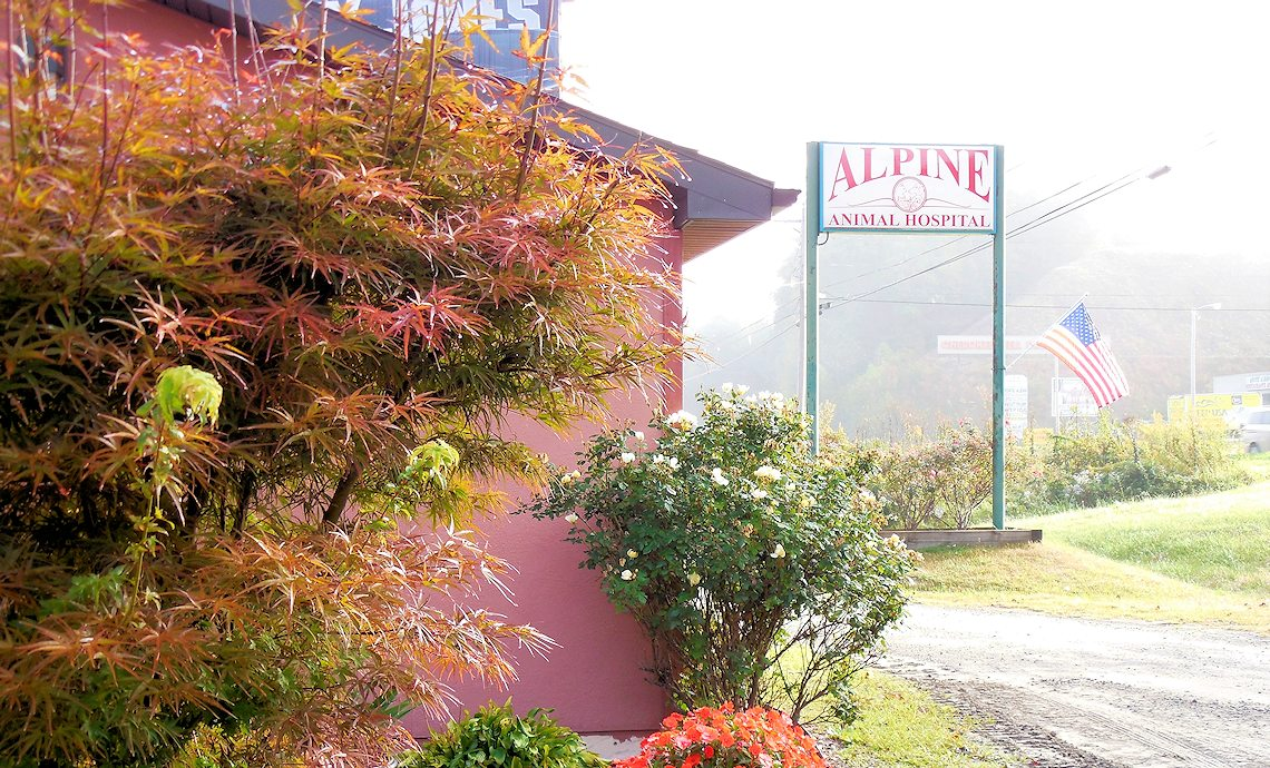 Alpine Veterinary Hospital - Murphy, NC