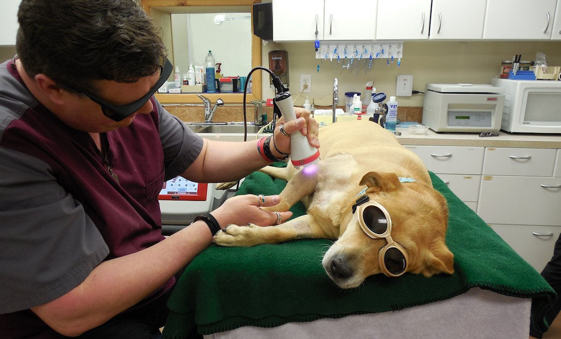 Companion Therapy Laser is available at Alpine Veterinary Hospital - Murphy, NC